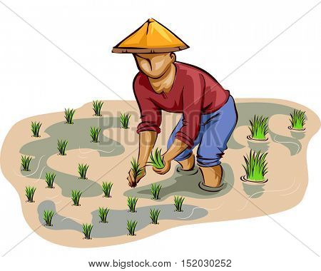 Illustration of a Farmer in a Conical Hat Planting Rice Stalks on an Irrigated Rice Field
