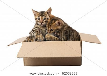 cuddling kittens in box, on a white background