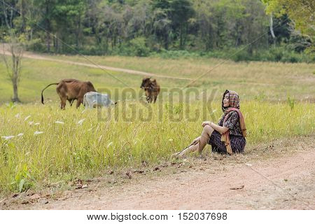 Women and cows in green pastures,woman farmer.