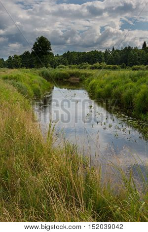 Slow flowing river in summer crossing partly abandoned meadows, Bialowieza Forest, Poland, Europe