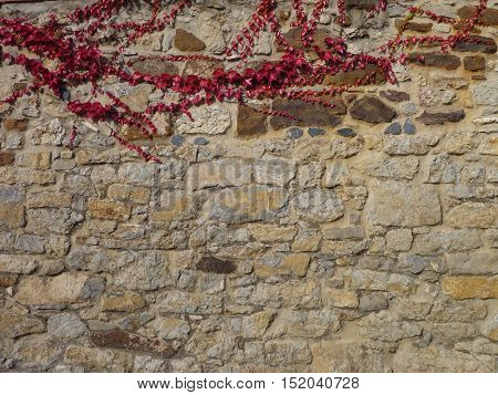 Stone Wall With Red Ivy Branches