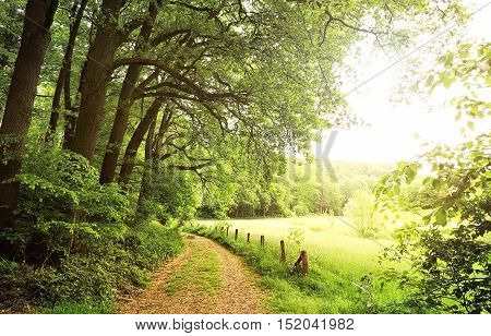 Idyllic footpath through fields and forest with smooth sunlight.