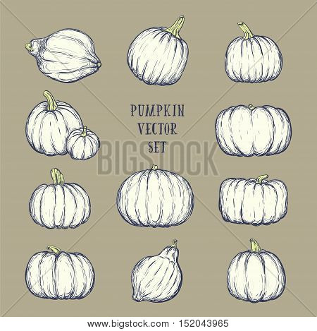 Monochrome pumpkin set for thanksgiving day halloween etc. Vector sketchy illustration