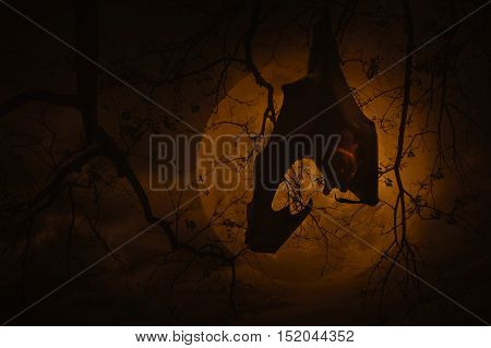 Bat scream and hang on dead tree over moon and cloudy sky Spooky background Halloween concept