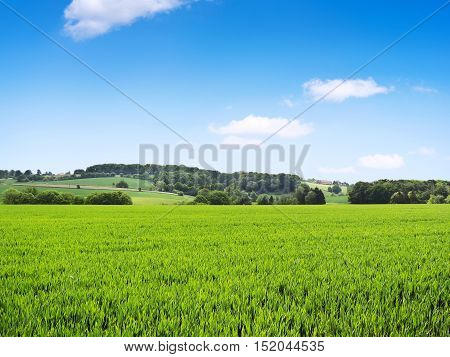 Idyllic country scene with crop field and clear blue sky. Farmhouses and forest in the background.