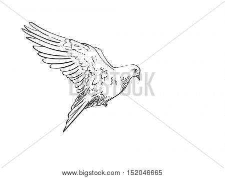 Sketch of pigeon bird flying, Hand drawn illustration