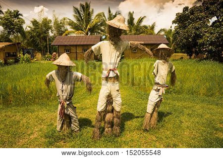 three of strawman are standing under the sun waiting for somthing