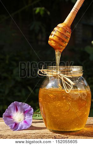 Honey Flowing Down From Dipper In Glass Jar.