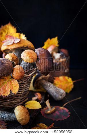 Wild Forest Edible Mushrooms (boletus) In Basket