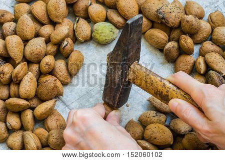 Woman's Hand Holding a Hammer for Cracking Almond Shells