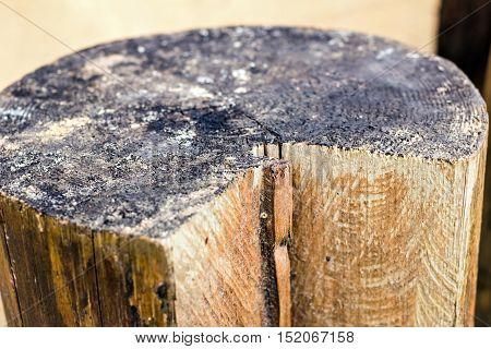 Big old log at day like table