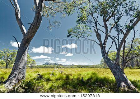 Tasmania green grass landscape