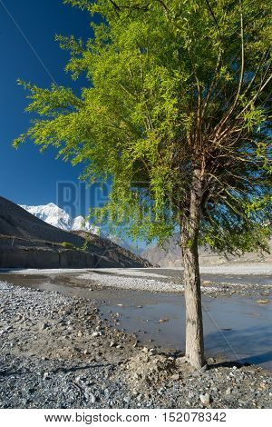 Tree in mountain valley in Nepali. Beautiful natural landscape