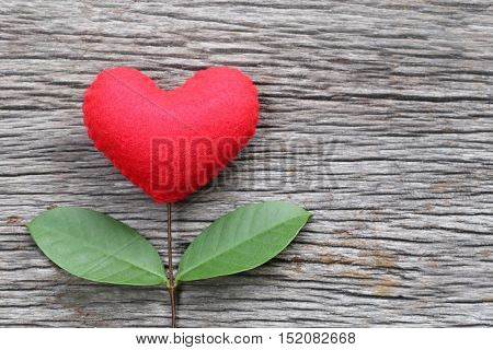 Red heart placed on a old wooden table in connect with branches of tree and have green leavesconcept of love empathy take care and Valentine's Day.