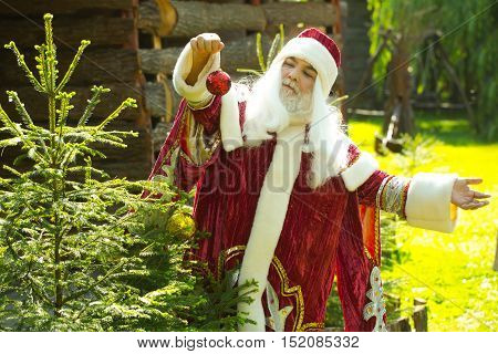 Happy santa claus man with white beard and hair in new year red costume decorates Christmas tree on sunny day on natural background