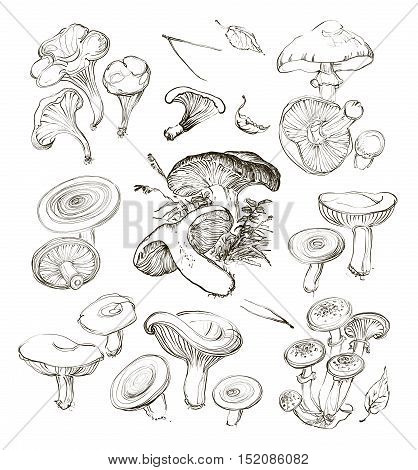 Vector hand drawing a realistic set of mushrooms. Realistic illustration collection plate of wild mushrooms