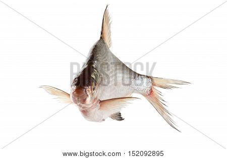 bream fish isolated on white background closeup