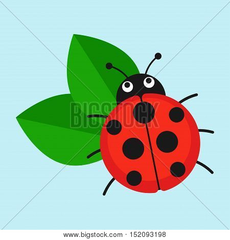 Ladybug on leaf vector illustration. Cartoon ladybug isolated in a flat style. Funny insects or beetles.