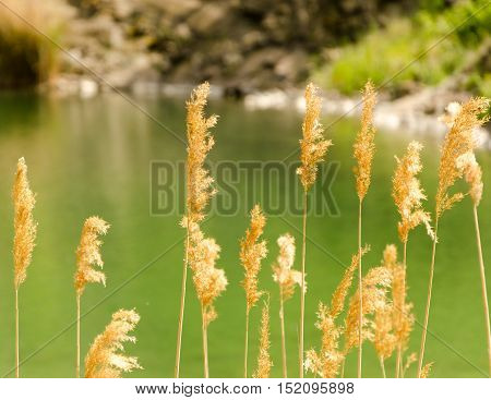 quarry pond with green color water and reed. summer season landscape. warm dry calm weather.