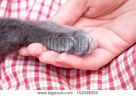 Fluffy Gray Kitten Paw In The Women's Palm, Hand