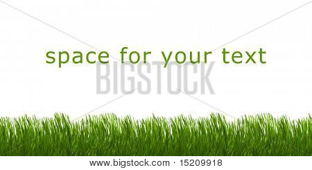 An image of green grass with space for your text