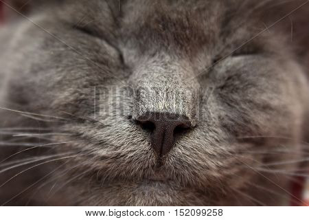 Gray Kitten Sleeping Sweetly On Back, Stretched Out Paw