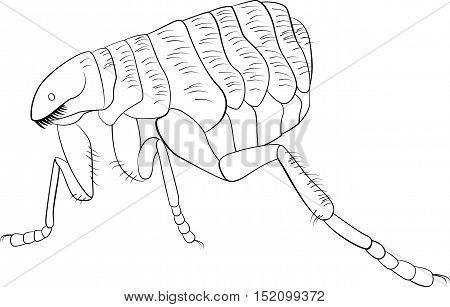 Black and white vector sketch illustration of flea