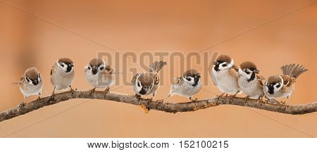 a lot of little funny birds sitting on a branch in Sunny weather