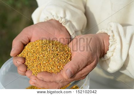 Handful of bee pollen. vitamins and minerals. healthcare