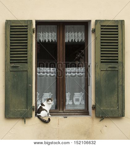 Cat sitting by the window with old style green shutters