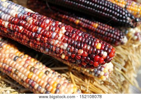 close up of corn on the cob