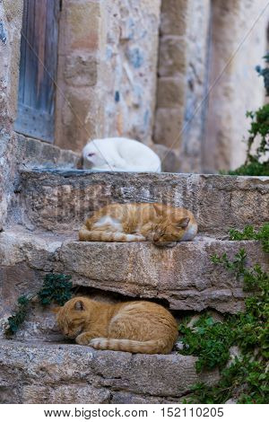 Red stray cat adult on a wall between the medieval streets of the Byzantine castle of Monemvasia, Lakonia, Peloponnese, Greece.