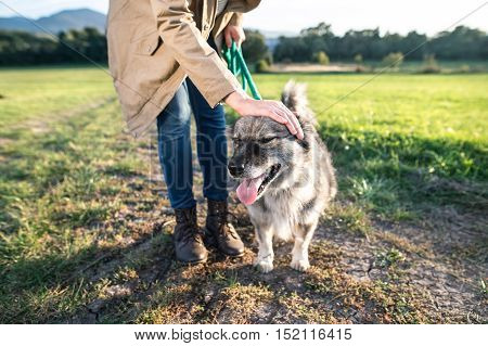 Unrecognizable young woman on a walk, petting her dog in green sunny nature