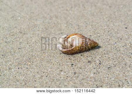 sunny beach scenery including a hermit crab with snail shell