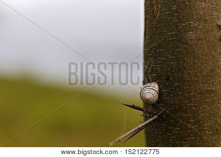 a Snail on a tree with spikes