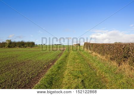 Footpath And Hedgerows