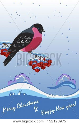 Winter greeting card with a bird, bullfinch, on snowy background.