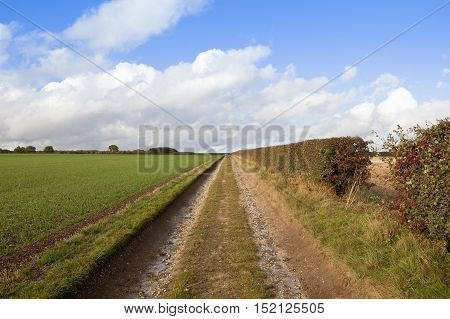 Wheat Field And Bridleway