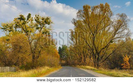 Autumnal landscape with rural road in Sumskaya oblast Ukraine