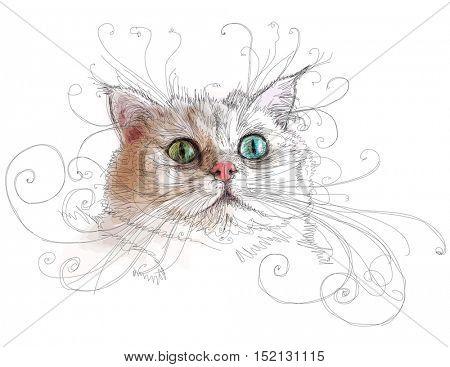 Portrait of attractive cat - color illustration