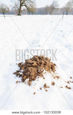 Brown sandy molehill in white winter snow