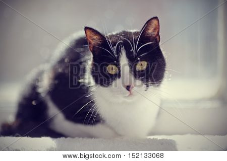 Black-and-white cat sits at a window in sunshine.