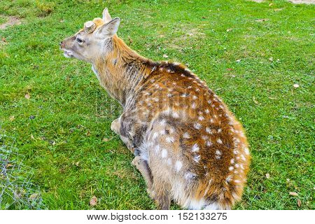 Deer - large animals with an elegant body and slender shapely legs