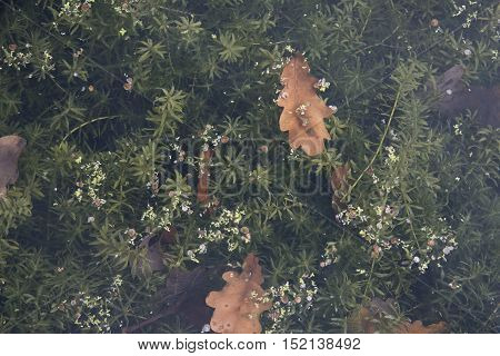 plants growing underwater with leaves floating on the top during autumn