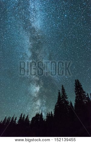 fir trees and milky way