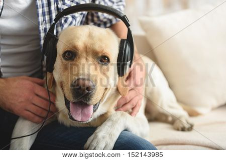 happy dog lying on a sofa with the owner while wearing headphones and looking into a camera