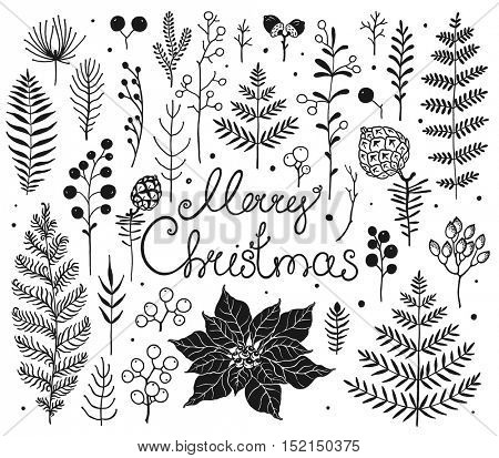 Collection elements branches, leaves, pine cones, berries, flower Poinsettia, plants for Christmas. Vector hand-drawn illustration of silhouette for your holiday Christmas floral design.