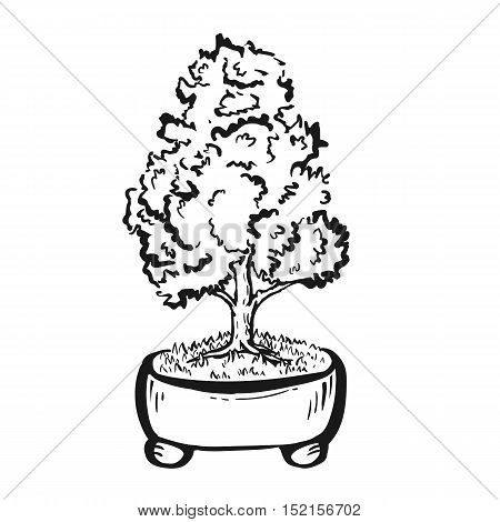 Handdrawn decorative asian bonsai tree in the pot with straight trunk.