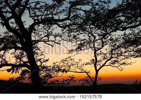 Bare trees branches twilight sky