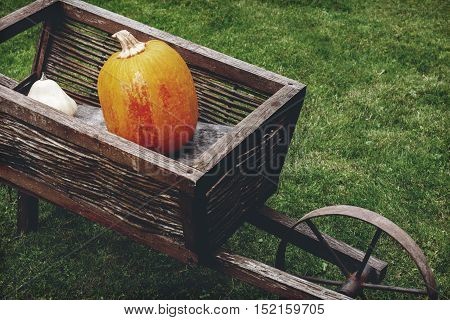 Old wooden cart with pumpkins. Retro aged photo.
